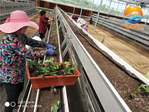 草莓栽培槽